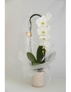 Orquídia blanca gegant