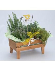 Caixa fusta - planta aromàtica