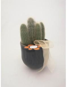 """Cactus """"cua de xai"""""""