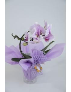Orquídia circular